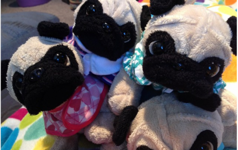 Pug-a-palooza is for the Dogs