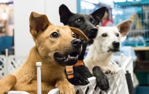 Why New Jersey Should Enact California's New Pet Adoption Law
