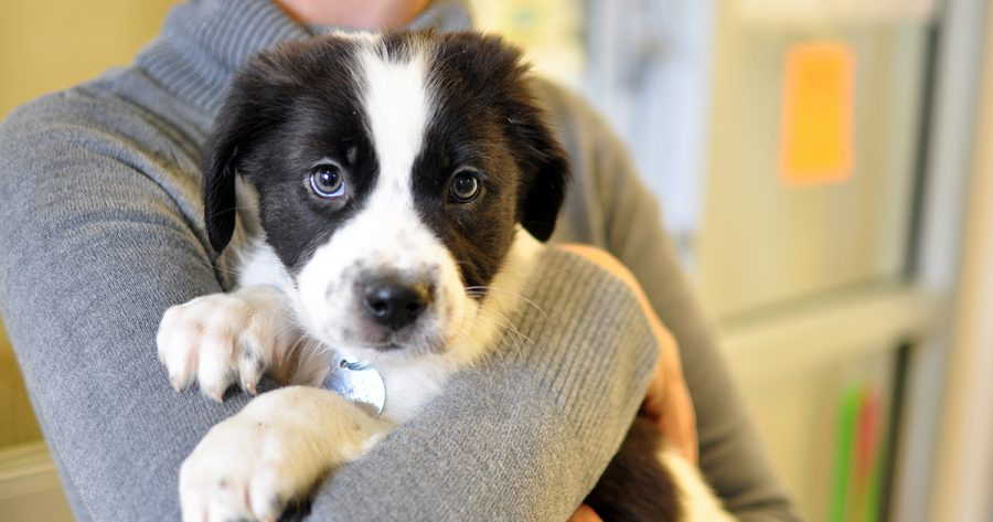 Increase in COVID-19 Dog Adoptions